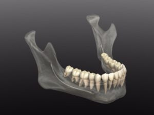 Transparent image of the lower jaw